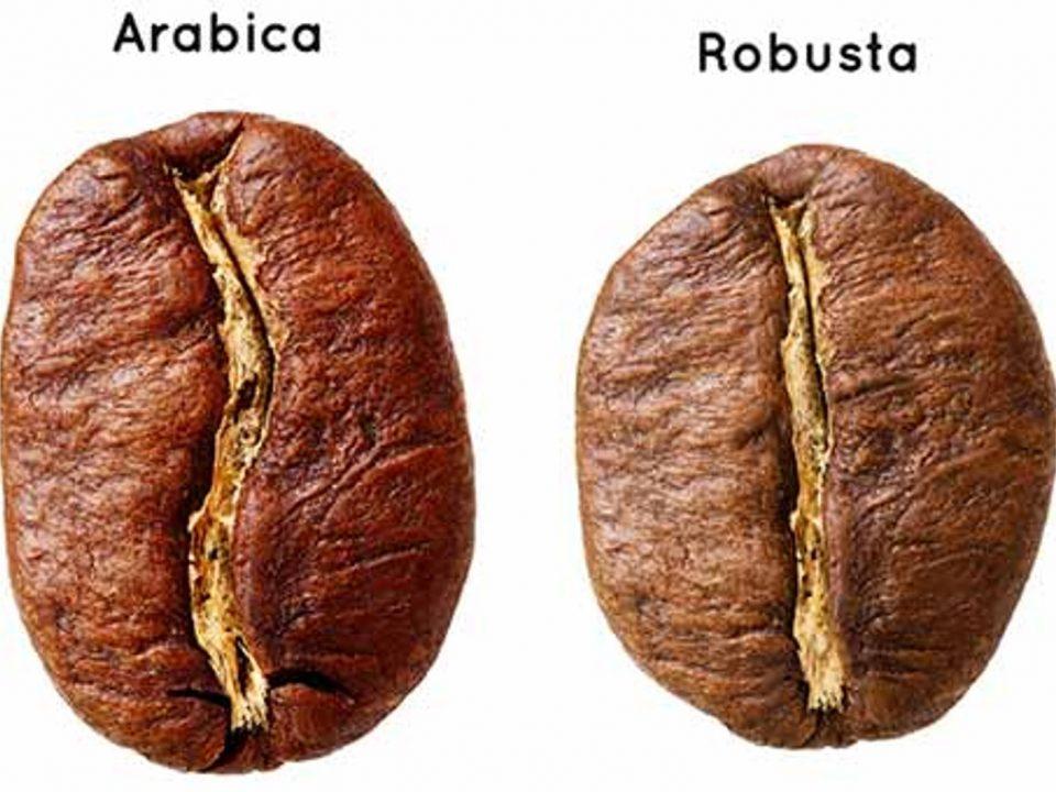 caffe arabica il migliore? Sfatiamo un mito